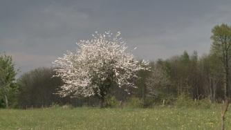 jpfena-arbre-1